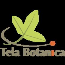 Le MOOC BOTANIQUE 2018 – Apprendre à connaître les plantes | en partenariat avec le Jardin des Plantes