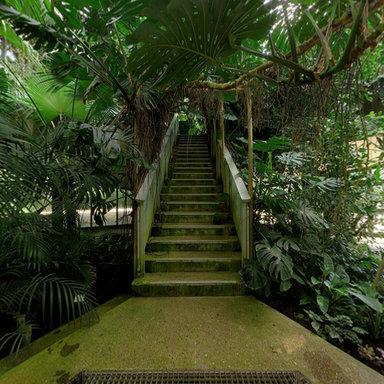 visite de la serre quatoriale - Jardin Des Plantes Lille