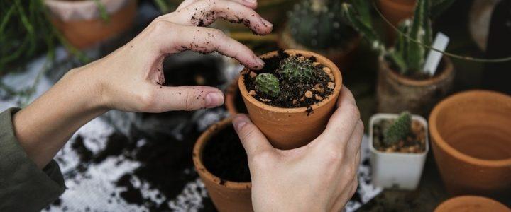 Des idées toutes simples pour jardiner chez soi – Que Faire à Paris ?