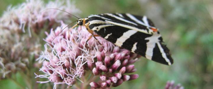 Cycle de connaissances – Accueillir la biodiversité chez soi